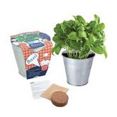 Herb Potting Sets - Basil